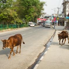 UPAP_Nepal165