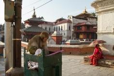 UPAP_Nepal189